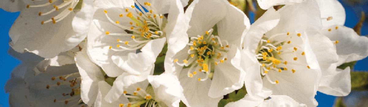 Photo couverture avec arbre en fleur